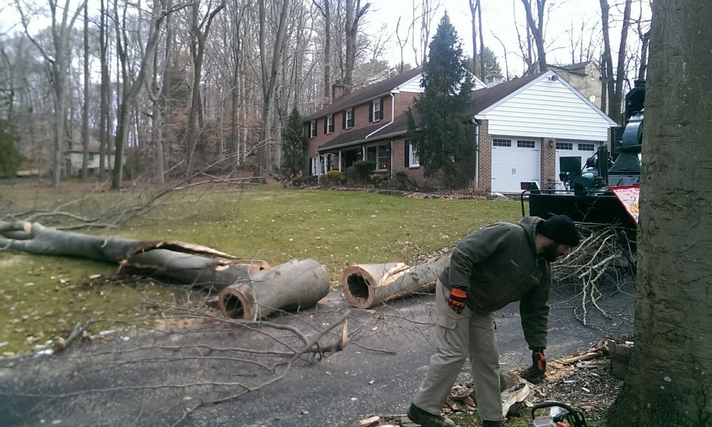 Removing a Tree in Chester County