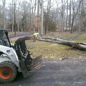 While Removing a Tree in Chester County