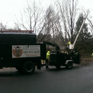 North New Castle County Tree Pruning Job