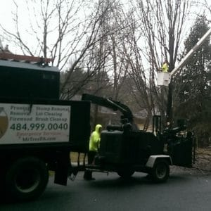 North Wilmington Tree Pruning Job