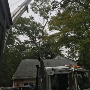 Tree Removal by Mr. Tree