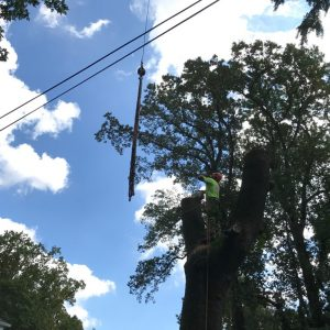 Removing a tree with a crane in Media, PA