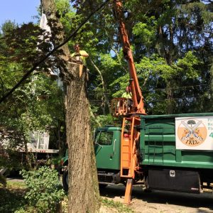 Removing a Red Maple Tree Using a Grapple Truck in Media PA
