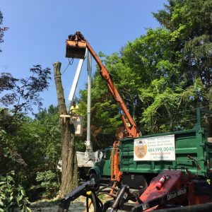 Media PA Tree Removal by Mr. Tree