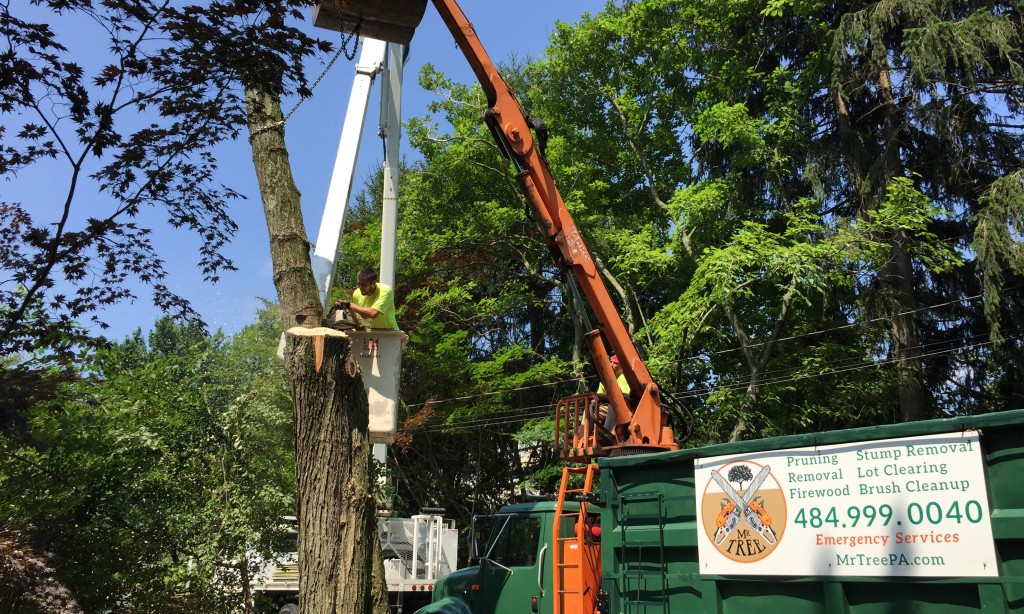 Banner Image for Media Tree Removal of Red Maple Tree