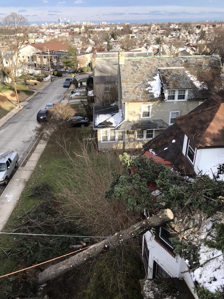 Mr. Tree Storm Cleanup After March 2018 Nor'Easter