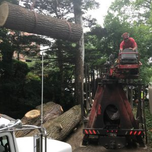 loading logs onto a trailer