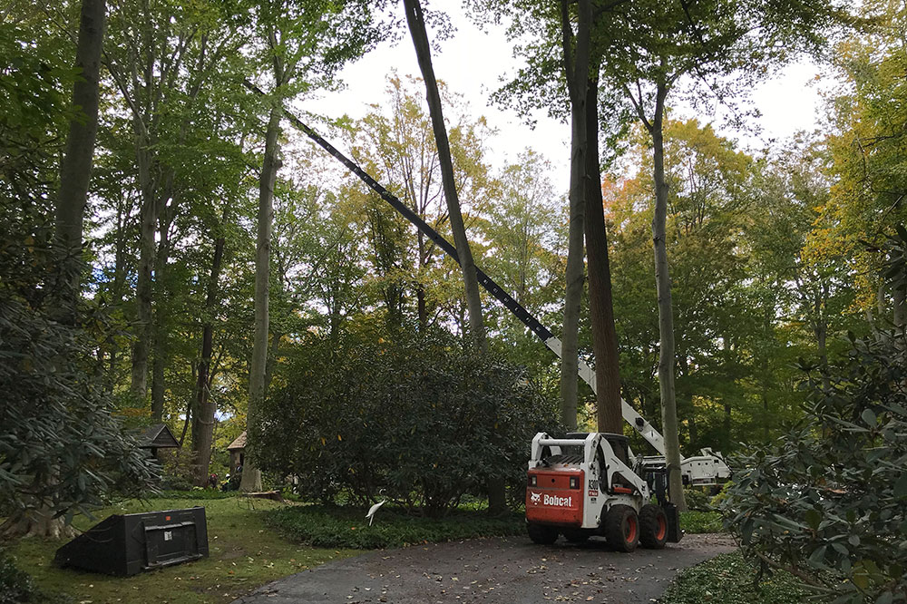 Banner Image Media Tree Removal