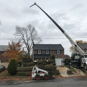 Mr. Tree tree removal in Drexel Hill, PA
