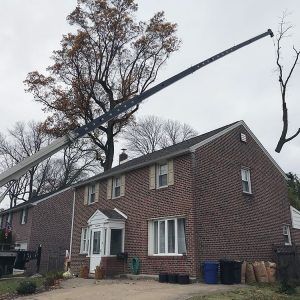 drexel hill tree removal taking down a tree with a crane