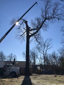 tree removal with a crane