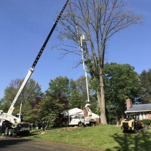 tree removal wallingford