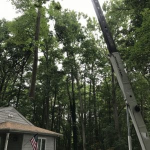Tree removed above house in wallingford