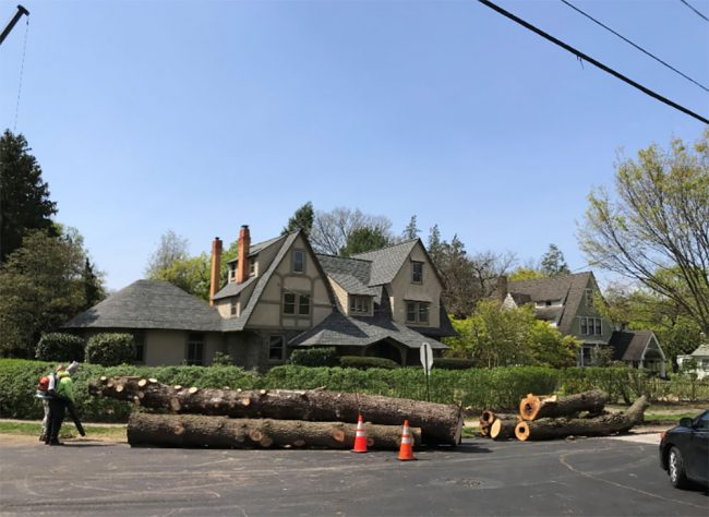 After tree removal in Newtown Square