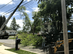 Tree Removal Aston PA